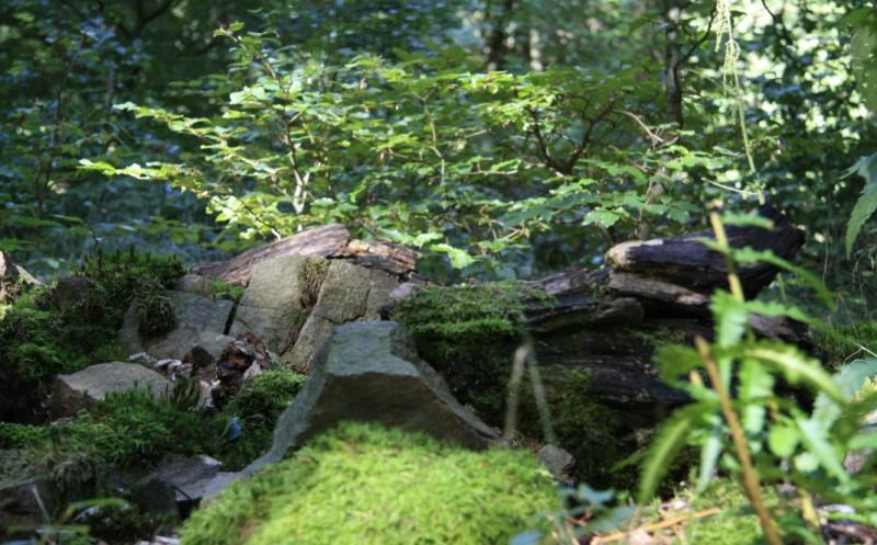 Bild mit Blick auf den Waldboden