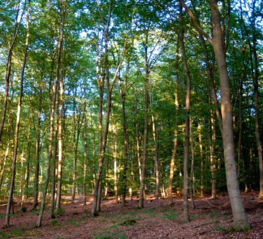 Bild mit Blick in den Wald