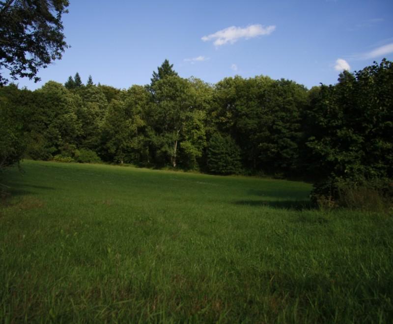 Bild mit Blick auf den Wald